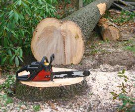 padure-taiata-lemn